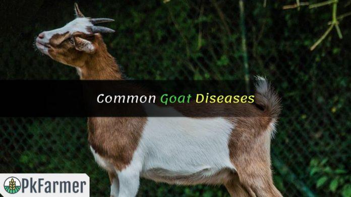 Common Goat Diseases