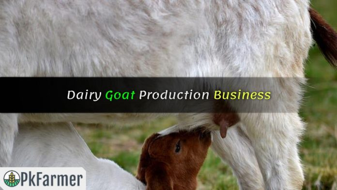 Dairy Goat Production Business