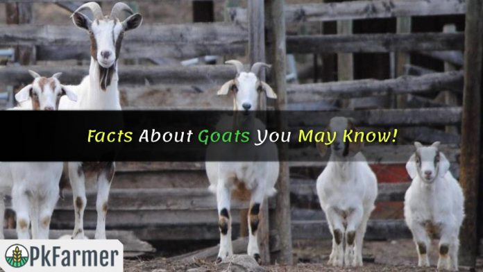 Facts About Goats You May Know