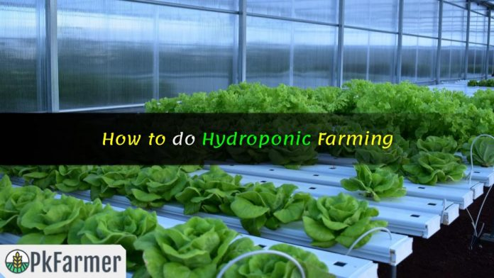 How to do Hydroponic Farming