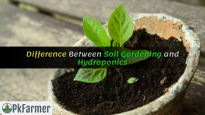 Difference Between Soil Gardening and Hydroponics