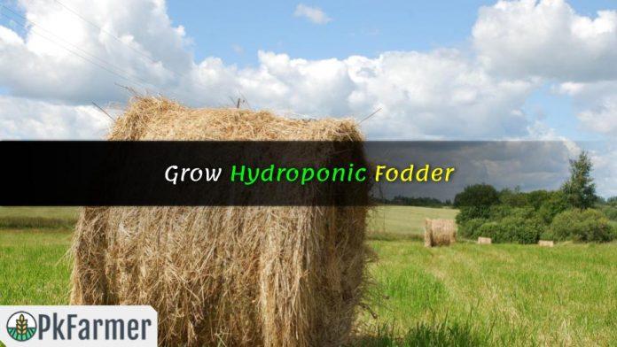 Grow Hydroponic Fodder