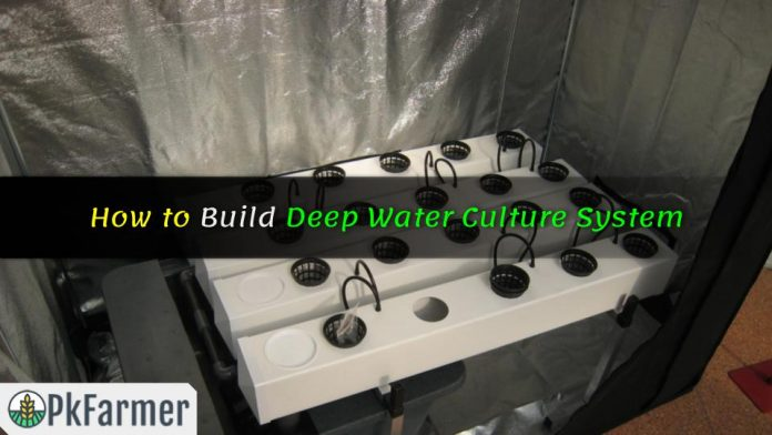 How to Build Deep Water Culture System