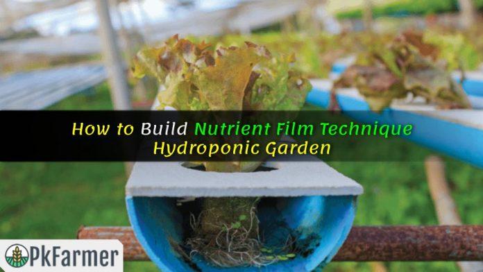 How to Build Nutrient Film Technique Hydroponic Garden
