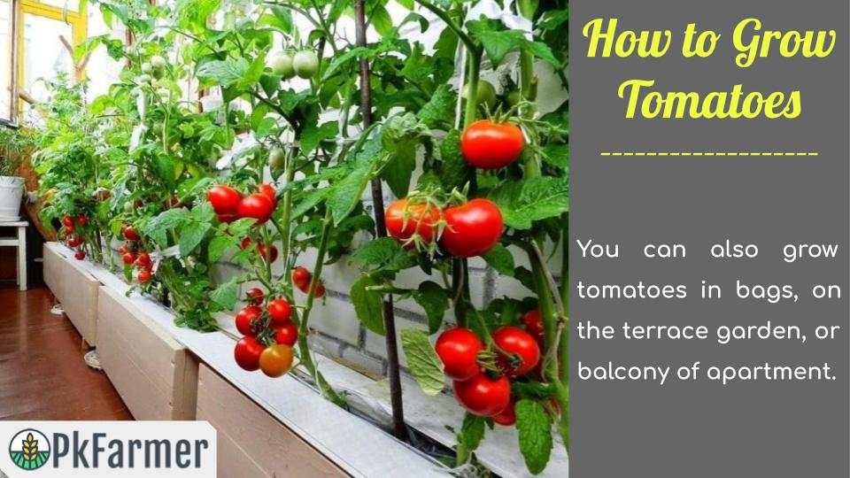 How to Grow Tomatoes Alternative Places