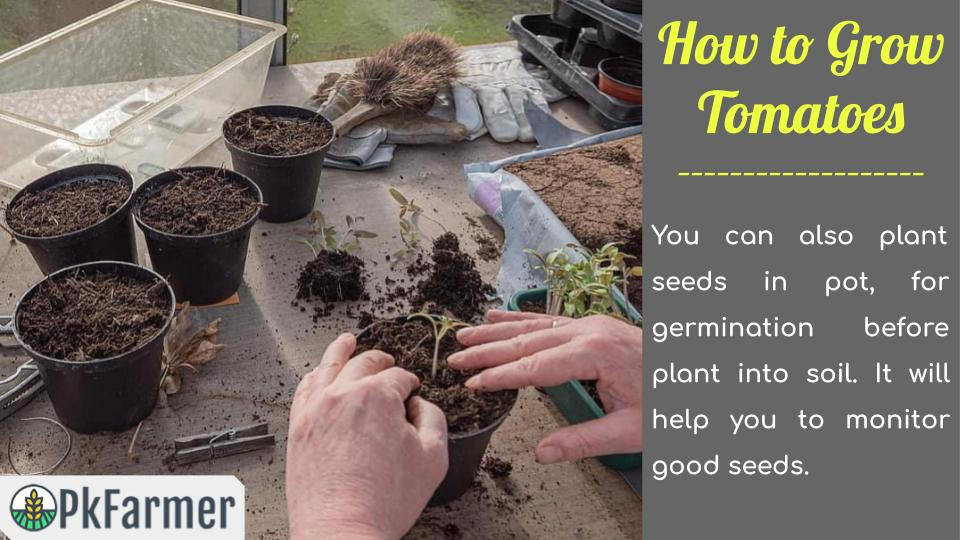 How to Grow Tomatoes Planting Seeds