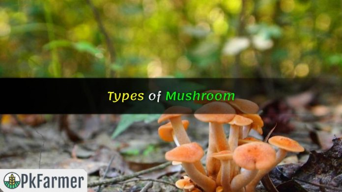 Types of Mushroom