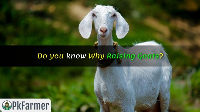 Do you know Why Raising Goats