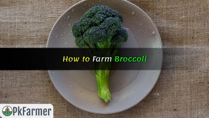 How to Farm Broccoli