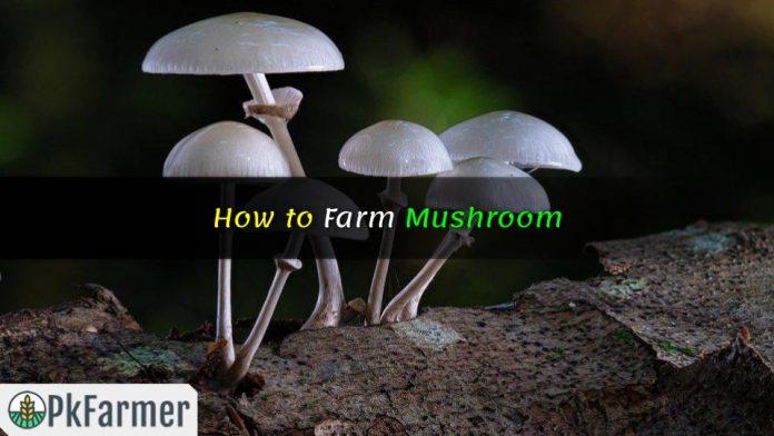 How to Farm Mushroom