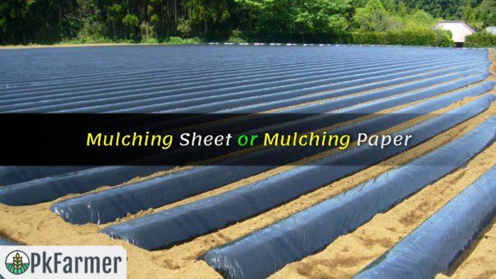 Mulching Sheet or Mulching Paper