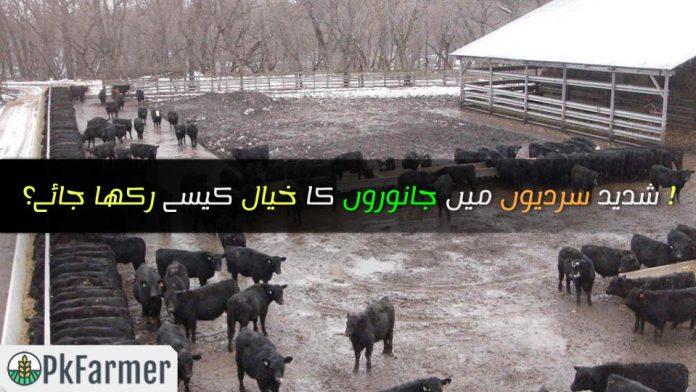 شدید سردیوں میں جانوروں کا خیال کیسے رکھا جائے؟